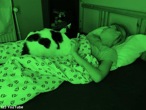 飼い主さんが眠っている間…猫たちはこんな感じ00
