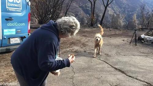 カリフォルニアの山火事を生き残った犬02