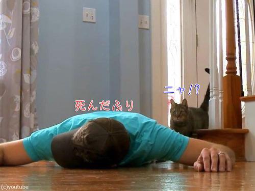 猫の前で死んだふり00