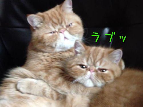 愛し合う猫00