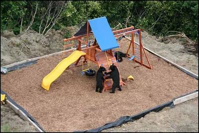 庭に遊び場を作ったら…クマさんが…喜んで遊んでた01