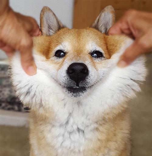 犬のほっぺた03