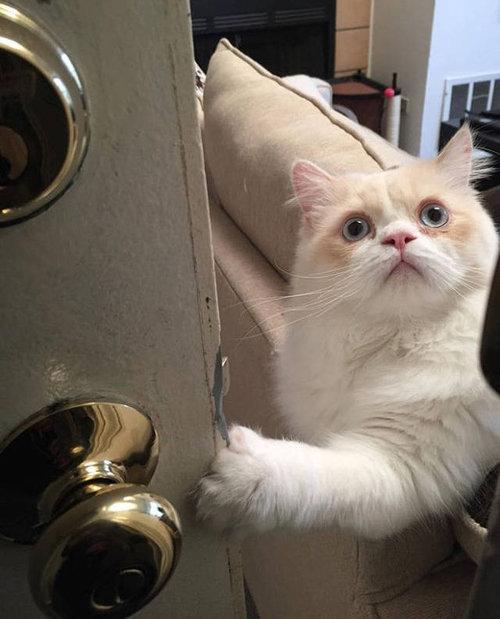 ひとりにしておけない猫02