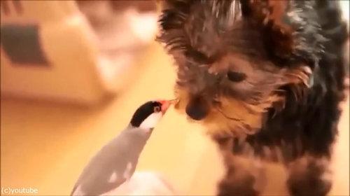鳥と犬の友情06