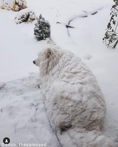 うちの犬がひと回り大きくなってた…もっこもこの体05