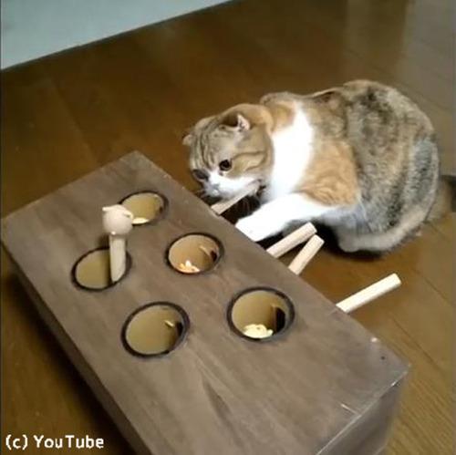 モグラたたきで遊ぶ猫02