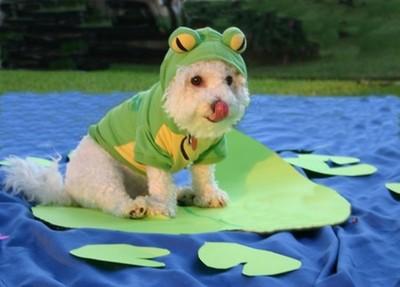 酷い犬のコスプレ09