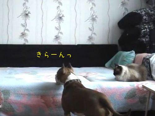 留守中にベッドを堪能する犬00