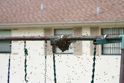 「家にハチの巣が…」素人が繰り広げたムチャな死闘01