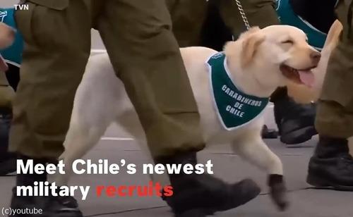 警察権の子犬がチリのパレードでお披露目01