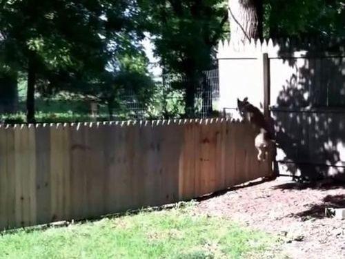 犬用のフェンスに誤算06