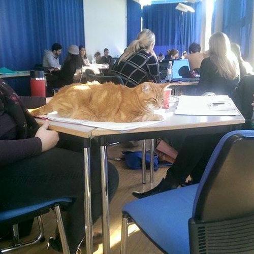 アウグスブルク大学の猫01