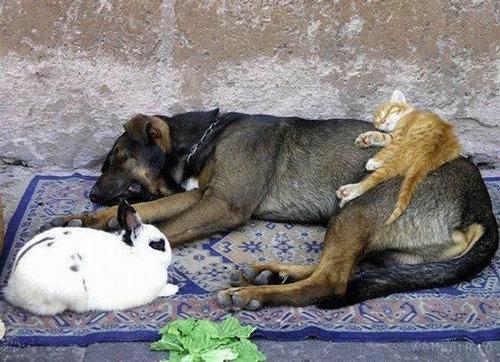 動物のベッド06