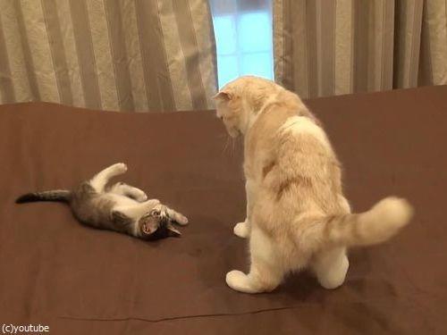 怒られた子猫の謎ポーズ02