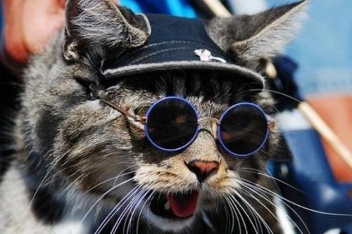 メガネ猫17