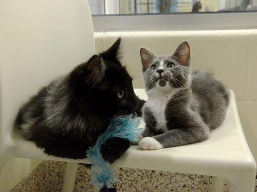 盲目の猫を黒猫が世話00