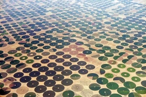 サウジアラビアの農場01