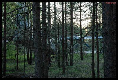 森に捨てられたロシアの輸送機02