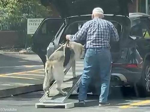 老犬を車に乗せるおじいちゃん00
