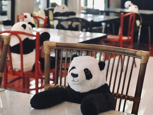 ベトナムのレストランがパンダのぬいぐるみ03