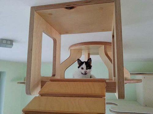 猫用のつり橋00