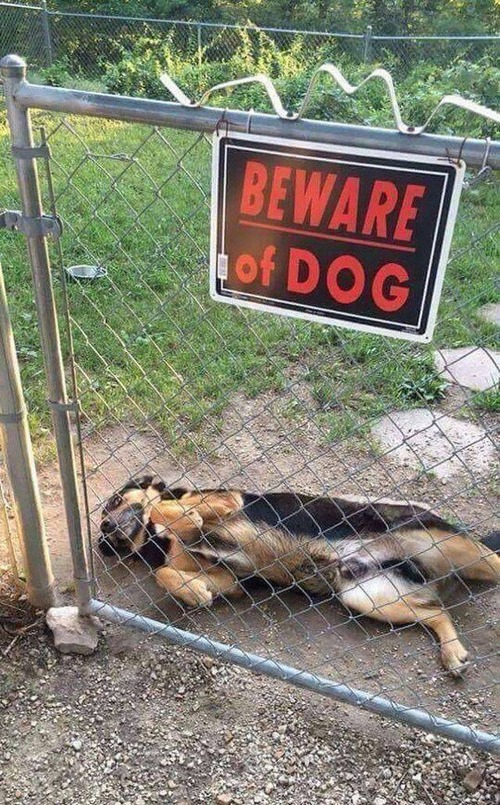 猛犬注意…と思ったら違う例04