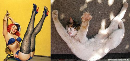 猫のポーズ07