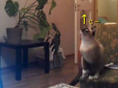 猫が天井に向かってジャンプ00