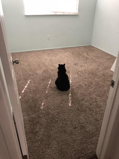 ルームメイトが出て行った後の猫01