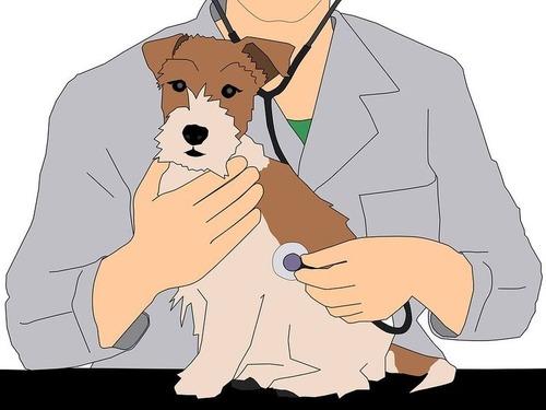 獣医を避けるうちの犬の戦略00