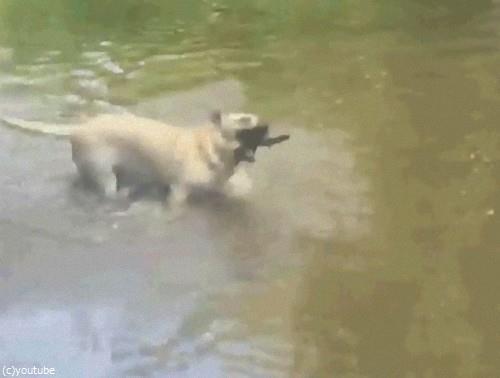 犬のスゴ技08