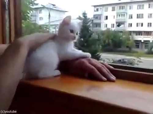 飼い主の腕を守る猫07