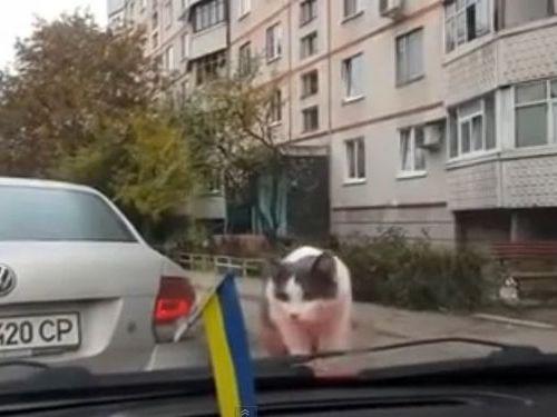 猫とワイパーの対決01