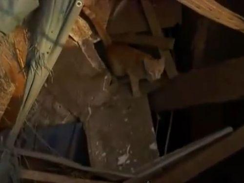 竜巻で生き別れの猫とニュースレポート中に再会01