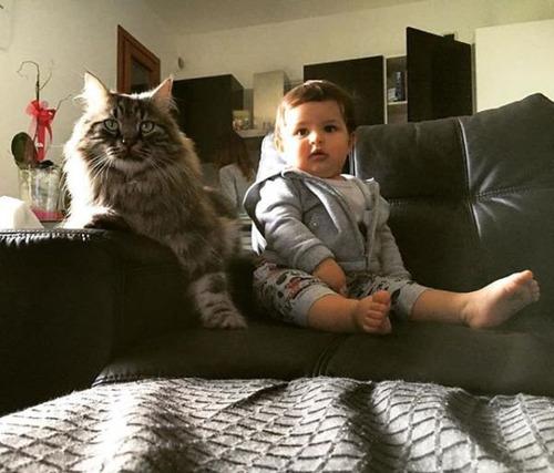 女の子を守る猫13