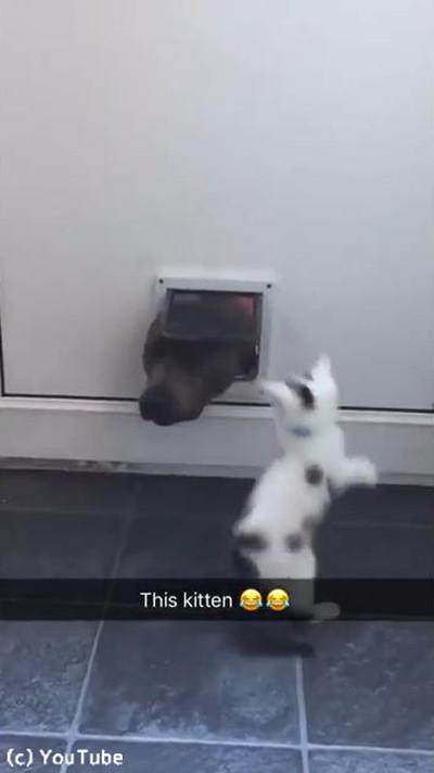 猫ドアで遊ぶワンニャン04