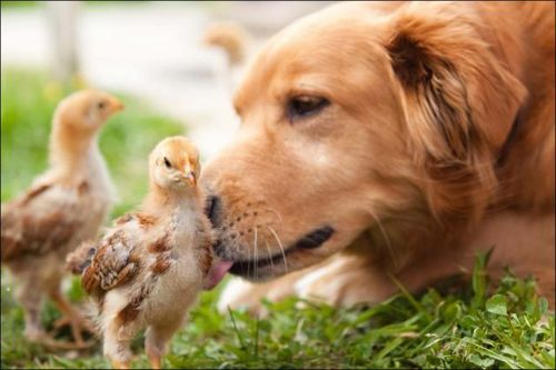 愛情いっぱいの動物10