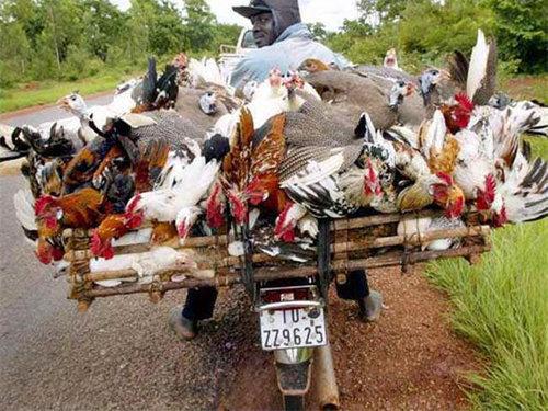 バイクで物を運ぶ限界13