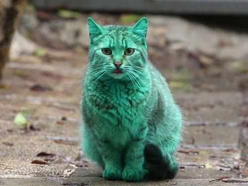 エメラルドグリーン色の猫01