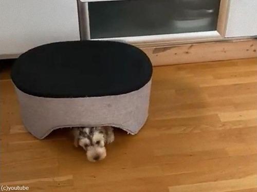 犬がベッドを逆さにすると02