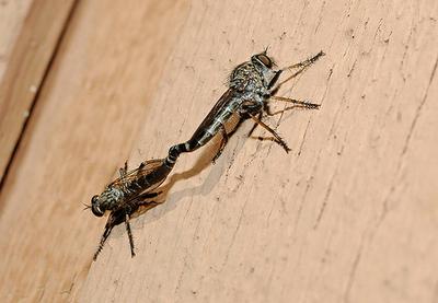 虫の交尾11