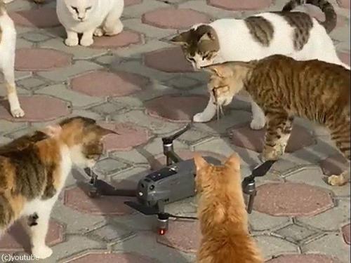 ドローンのプロペラと猫00