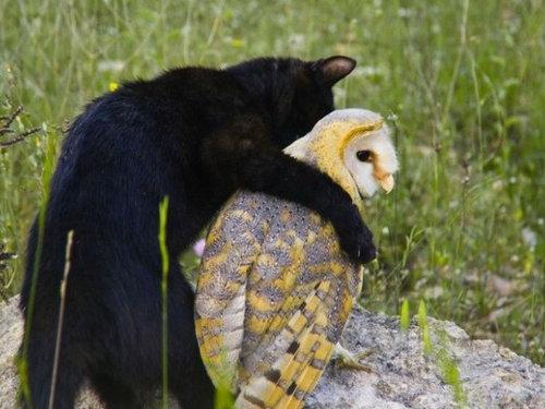 他の動物と仲良くする猫13