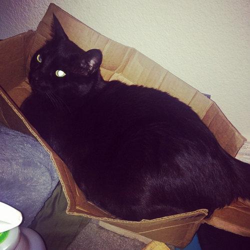 箱入り猫03