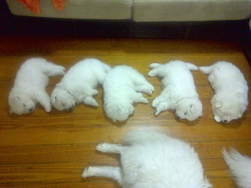 家族で就寝する犬03