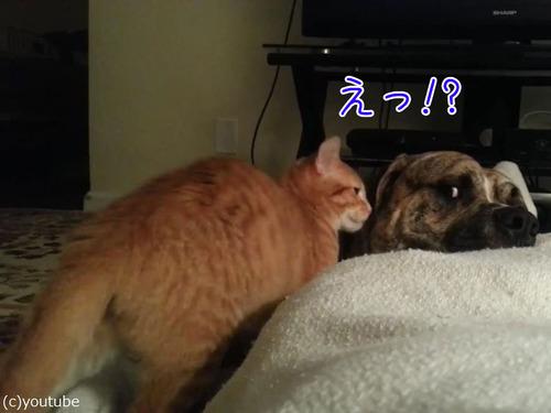 犬と猫が出会って2週間後00