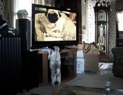 猫の番組を見つめる猫14