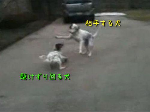 演技力を持つ犬