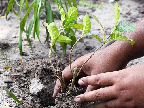 インド、5000万本の木をたった24時間で植える00