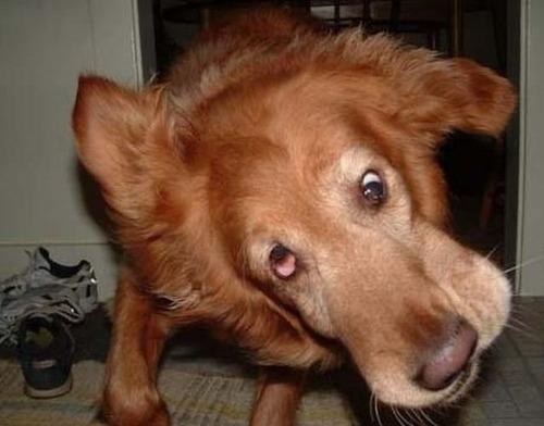 犬のブルブル01